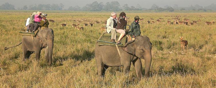Elefanten Reitsafari Kaziranga Nationalpark