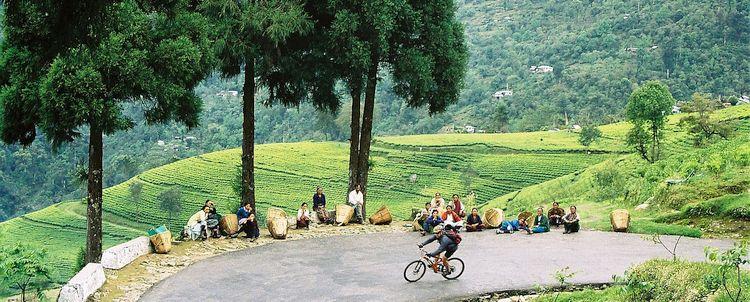 Abfahrt Rad Reise Sikkim durch Teegarten