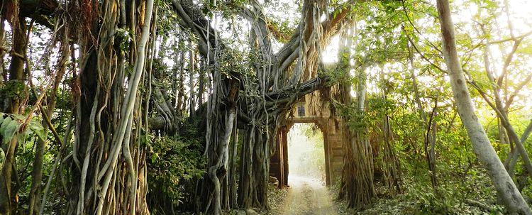 Banyan Tree Rajasthan Ranthambore National Park