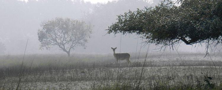 Sundarban Wald Wiese Reh Bangladesch