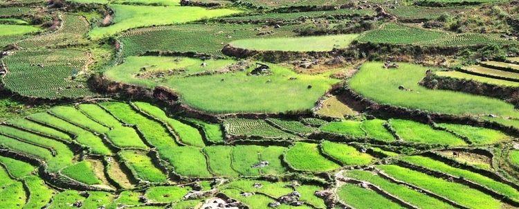 Bhutan terrassierte Reisfelder