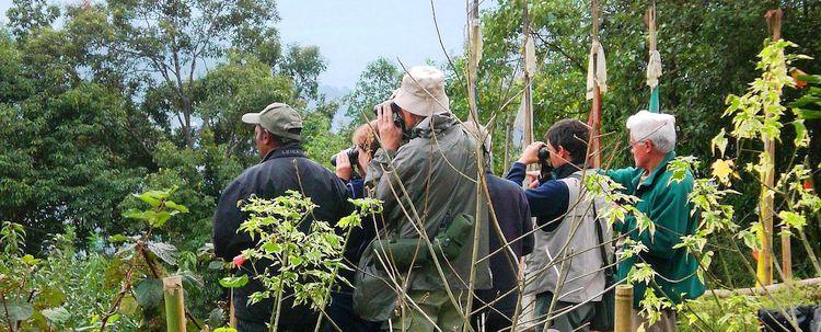 Vogelbeobachtungen Bamboo Retreat Sikkim Indien