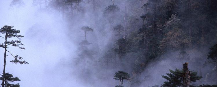 Arunachal Pradesh Wald Mystik