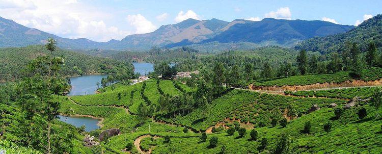 Kerala Teegarten Gebirge