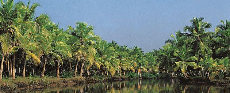 Kerala Wasserwege Kokospalmen