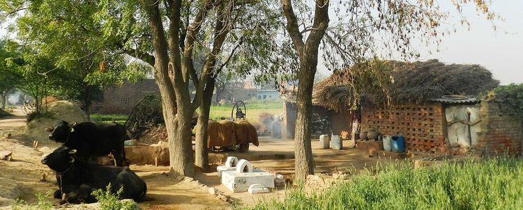 Auf dem Lande bei Agra Indien