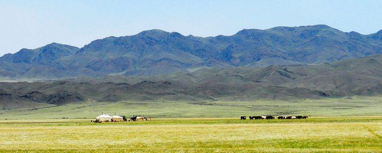 Landschaft Wüste Gobi im Sommer