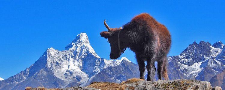 Ama Dablam Nepal