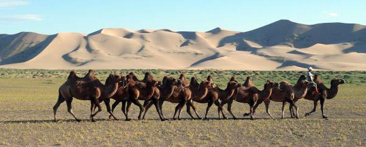 Tauchen Sie mit uns ein in die Welt der Kamelnomaden in der Wüste Gobi, Mongolei