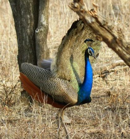 Ornithology Tours