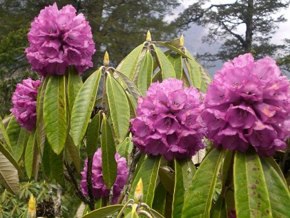 Botanical Tours