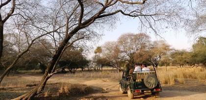 A Safari Trip