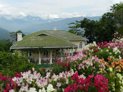 A Glimpse of Darjeeling