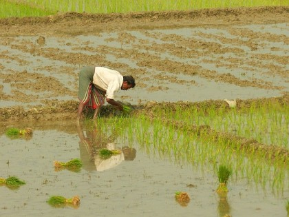 Farming in Bangladesh